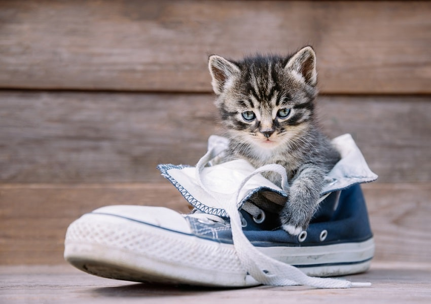 How to Get Cat Pee Out of Shoes - Shoerazzi